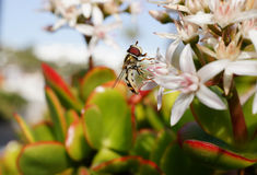 Муха цветка Стоковое Фото
