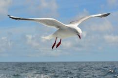 Муха чайки над морем стоковые фотографии rf