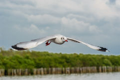 Муха чайки Стоковое фото RF