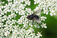 муха Стоковые Изображения RF