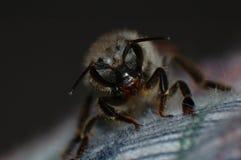 муха Стоковая Фотография