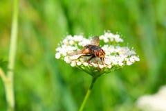 муха 2 Стоковое Изображение RF