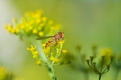 муха Стоковые Изображения