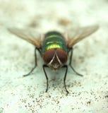 муха 4 стоковые фото