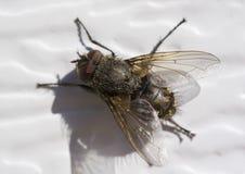муха Стоковое Фото