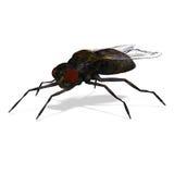 муха иллюстрация штока
