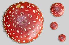 муха agaric Стоковое Изображение RF