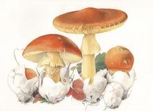 Мухомор caesarea гриба Стоковое фото RF