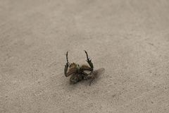 Мухы еды небольшие Будние дни в мире насекомых стоковые изображения