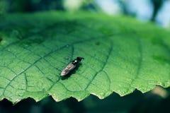 Мухы отдыхая на листьях стоковая фотография rf
