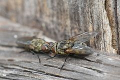 мухы Стоковые Изображения