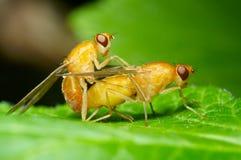 мухы Стоковые Фотографии RF