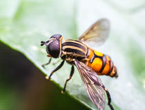 мухы Стоковое фото RF