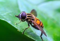 мухы Стоковые Изображения RF