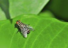 мухы Стоковые Фото