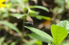 мухы Стоковое Изображение