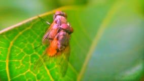 мухы 2 Стоковые Изображения