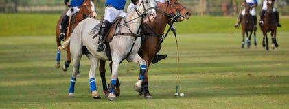 Мушкел шарика поло удара лошади поло Стоковое Изображение RF