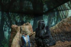 Мудрая горилла Стоковые Изображения RF