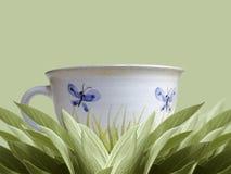мудрый чай Стоковое Изображение