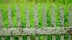 Мшистая старая загородка Стоковое Изображение