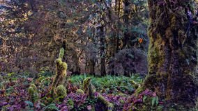 Мшистые деревья в лесе Стоковая Фотография RF