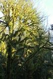 Мшистые деревья Стоковая Фотография RF