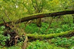 Мшистые деревья Стоковые Изображения RF