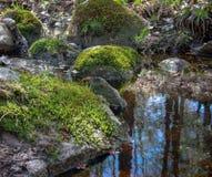 Мшистые утесы в отраженном лесе заводи Pring стоковые фото