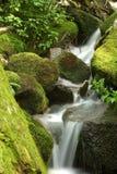 мшистый водопад стоковая фотография rf
