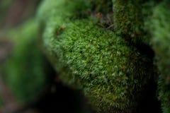 Мшистый камень Стоковое Изображение RF