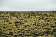 Мшистый ландшафт в Исландии Стоковые Изображения RF