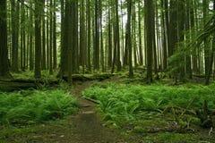 Мшистый пейзаж леса Стоковые Фото