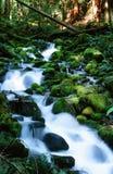 Мшистый поток в олимпийском национальном парке Стоковая Фотография RF