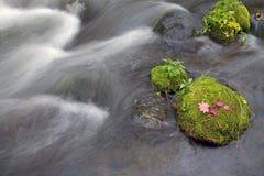 мшистый поток утесов Стоковые Фотографии RF