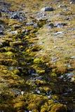 мшистый поток Стоковое фото RF