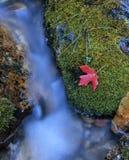 мшистый поток Стоковая Фотография