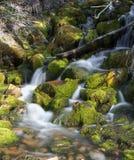 мшистый поток Стоковое Изображение