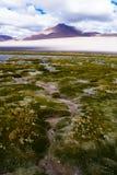 Мшистый путь к горе Стоковое Изображение RF