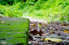 Мшистый путь ноги Стоковая Фотография