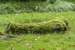 Мшистый ствол дерева лежа на зеленой траве Стоковое Изображение RF