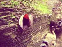 мшистый ствол дерева Стоковое Изображение RF