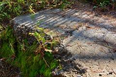 Мшистый часть каменного сляба и солнечного света, Стоковое Изображение