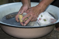 Мытье кота с мылом и водой Стоковые Изображения