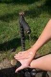 мыть рук Стоковая Фотография RF