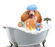 Мыть собаки стоковая фотография