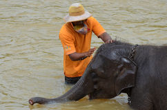 Мыть слона младенца на детском доме слона Pinnawala, Шри-Ланка Стоковые Фотографии RF