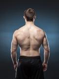 Мышечная задняя часть мужчины на синей предпосылке Стоковая Фотография