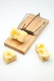 Мышеловка с сыром стоковые фотографии rf