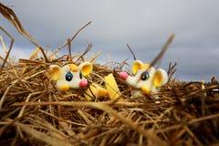 Мыши сидя в соломе Стоковые Изображения RF